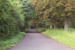 A country lane-in Hampshire beckons
