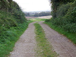 "Bridleway on Tarrant Hinton Down"" hspace="