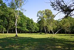 "New Forest near Lyndhurst"" hspace="