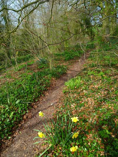 "Signs of Spring, Orange Way, Wiltshire"" hspace="
