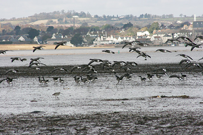 "Birds on the River Exe in winter"" hspace="
