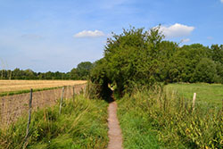 St Swithun's Way as it passess Winnall Moor Nature Reserve
