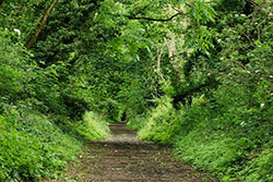 "Sunshine Trail, Shanklin"" hspace="