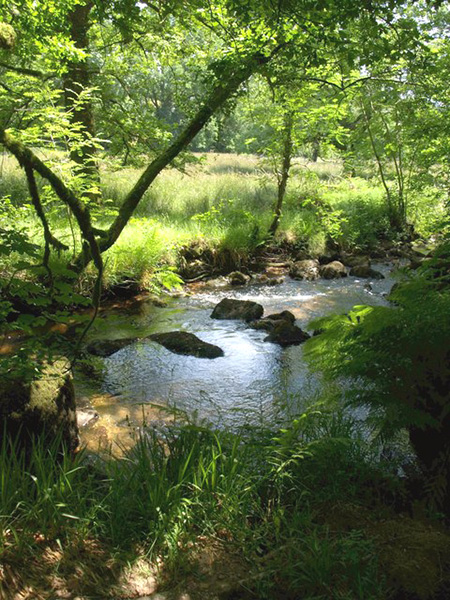 "West Webburn River on Two Moors Way"" hspace="