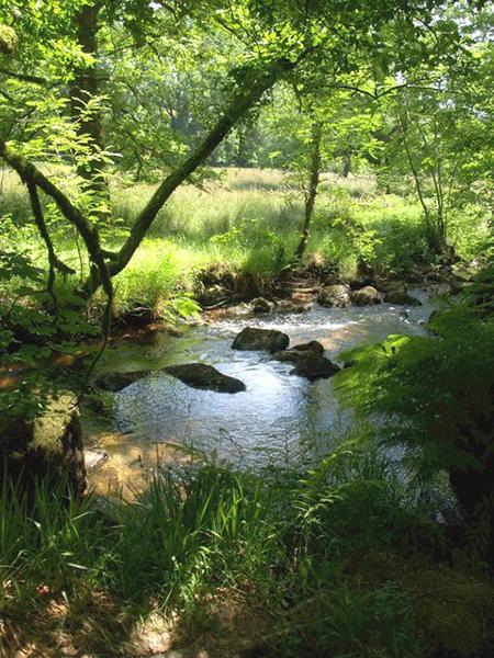 "West Webburn River on Two Moors Way"" hspace="