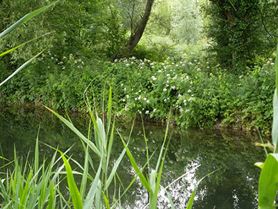 St Winnall Moors Nature Reserve Winchester