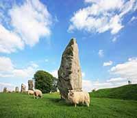Avebury sheep among the stones