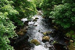 Sparkling stream in Dartmoor