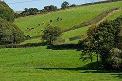 Devon countryside basking in the sunshine