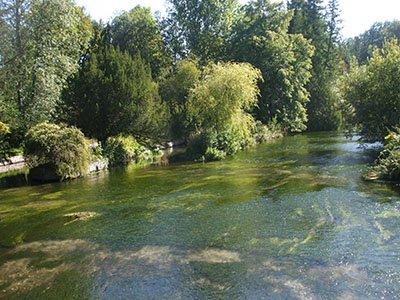 River Test Longparish