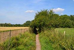St Swithun's Way as it passess Winnall Moor Nature Reserve