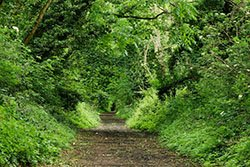 "Sunshine Trail, Shanklin"" hspace="
